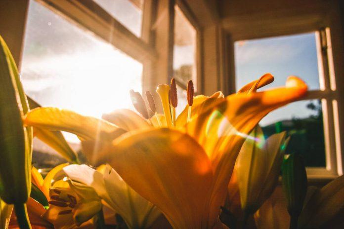 luz-natural-existe-indicador-minimo